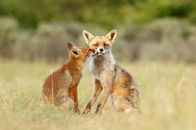 Vixen Photograph - Thank God It's Friday - Fox Love by Roeselien Raimond