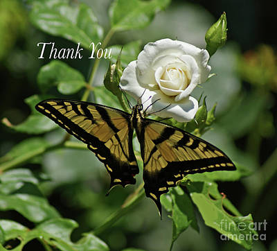 Photograph - Thank You Butterfly by Debby Pueschel