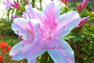 Photograph - Thank You by Denise F Fulmer