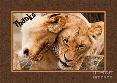 Digital Art - Thanks Lioness by JH Designs