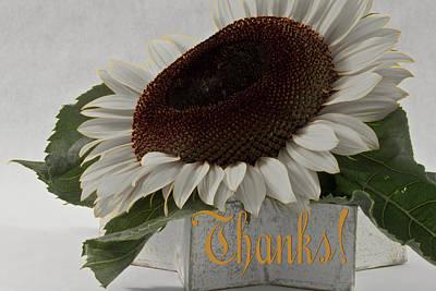 Photograph - Thanks - Short Petal Albino Sunflower  by Sandra Foster