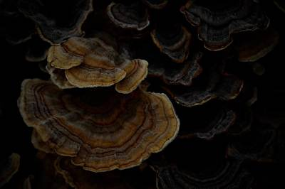 Photograph - Thanksgiving Turkey Tails by Photography by Tiwago