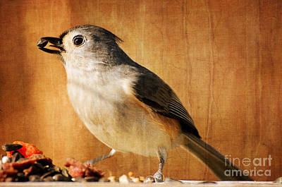 Tufted Titmouse Photograph - Thanksgiving's Bounty by Lois Bryan