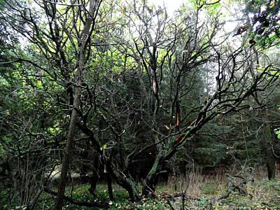 Photograph - That Crazy Funny Looking Tree by Cyryn Fyrcyd