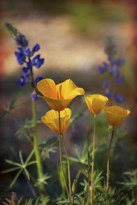 Photograph - That Golden Poppy Glow  by Saija Lehtonen