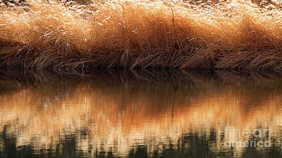 Photograph - That Golden Shore by Jim Garrison