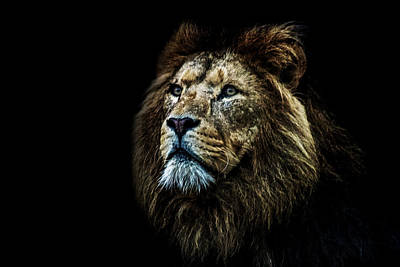 Bigcat Photograph - That Look by Martin Newman