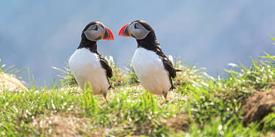 Puffin Photograph - That Moment When You Realize You Left Something Vital Behind  by Betsy Knapp
