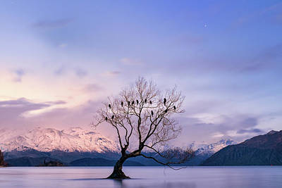 Photograph - That Wanaka Tree by Jose Maciel