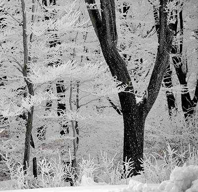 That Winter Art Print