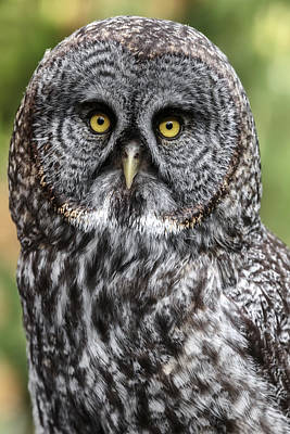 Photograph - That Wise Old Owl by Wes and Dotty Weber