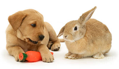 Photograph - That's My Carrot by Warren Photographic