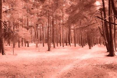 Clip Digital Art - The Abstract Forest Of Pine by Tommytechno Sweden