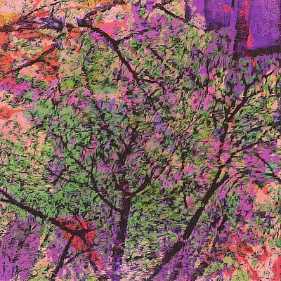 Photograph - The Abstract Tree by Lenore Senior