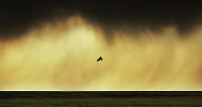 Orange And Brown Wings Photograph - The Acrobat by Brian Gustafson