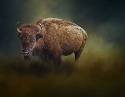 Bison Photograph - The American Bison by David and Carol Kelly