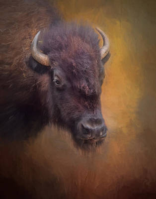 Bison Photograph - The American Bison II by David and Carol Kelly