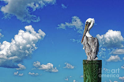 Photograph - The American Brown Pelican by Paul Mashburn