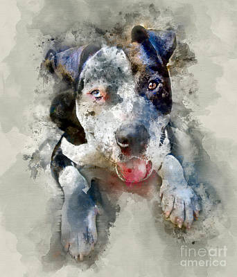 Miniature Schnauzer Painting - The American Pitbull by Jon Neidert