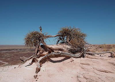 Photograph - The American Southwest by Mary Capriole