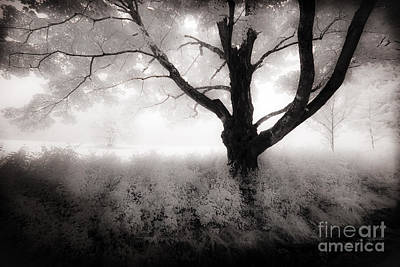 Art Print featuring the photograph The Ancient Tree by Craig J Satterlee