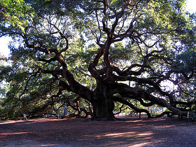 1400 Year Old Tree Photograph - The Angel Oak In Charleston Sc by Susanne Van Hulst
