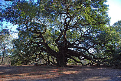 1400 Year Old Tree Photograph - The Angel Oak In Spring by Susanne Van Hulst