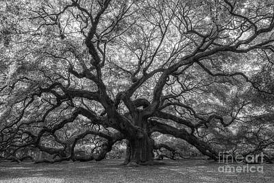 Surrealism Royalty-Free and Rights-Managed Images - The Angel Oak Tree BW  by Michael Ver Sprill