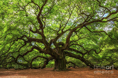 Surrealism Royalty-Free and Rights-Managed Images - The Angel Oak Tree  by Michael Ver Sprill