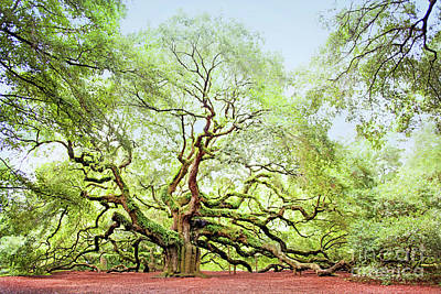 Photograph - The Angel Oak Tree by Sharon McConnell