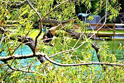 Photograph - The Anhinga Snake Bird by James Potts