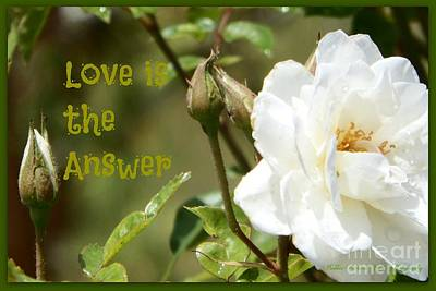 Photograph - The Answer  by Bobbee Rickard