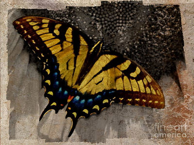 Photograph - The Antiqued Butterfly by Eric Liller