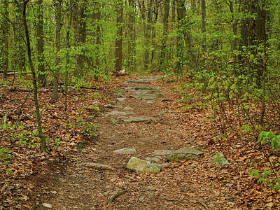 Photograph - The Appalachian Trail In Maryland With Rocks by Raymond Salani III