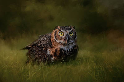 Photograph - The Appetizer Great Horned Owl Art by Jai Johnson