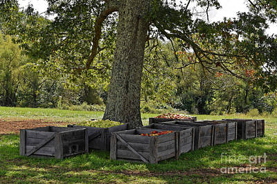 Photograph - The Apple Harvest by Paul Mashburn
