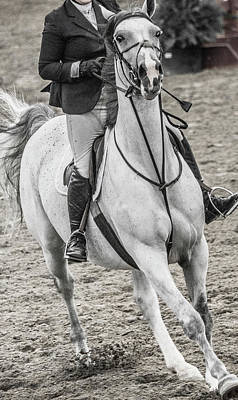 Warmblood Photograph - The Approach Show Jumping by Betsy Knapp