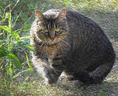 Photograph - The Approaching Cat by Mary Lee Dereske