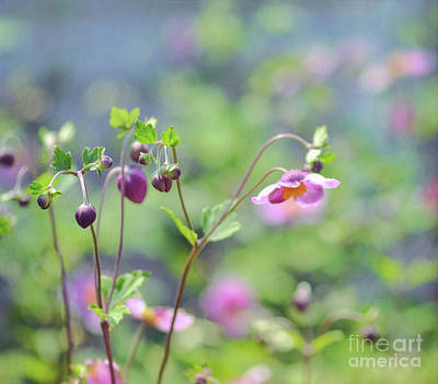 Photograph - The Art Of Flowers - Japanese Anemone by Kerri Farley