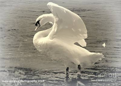Photograph - The Art Of The Swan  by Tami Quigley