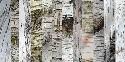 Photograph - The Artful Birch by Mary Bedy