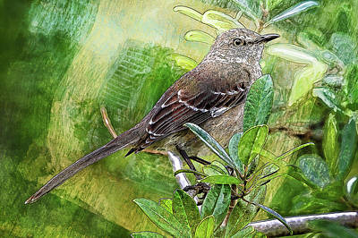 Photograph - The Artsy Mockingbird by HH Photography of Florida