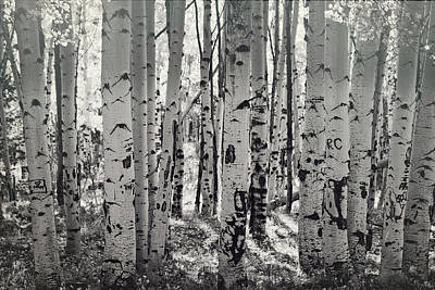 Photograph - The Aspen Forest In Black And White  by Saija Lehtonen
