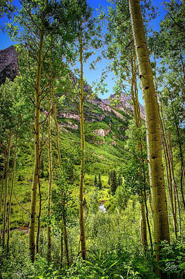 Photograph - The Aspen Grove by Endre Balogh