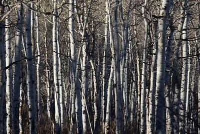 Digital Art - The Aspens 5 by Ernie Echols