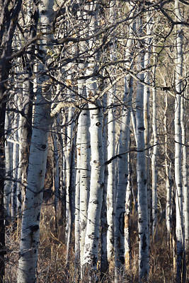 Digital Art - The Aspens 7 by Ernie Echols