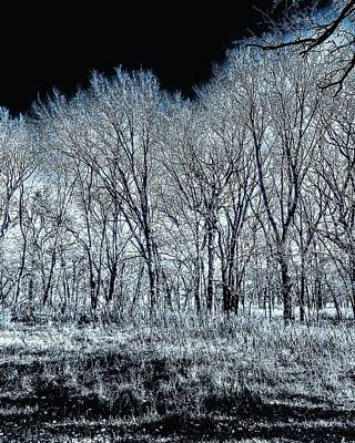 Photograph - The Aura Of Trees Against A Crystal Clear Sky by Michael Oceanofwisdom Bidwell