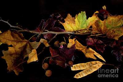 Photograph - The Autumn Branch by Ivete Basso Photography