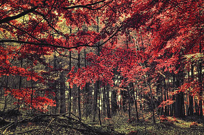 Photograph - The Autumn Colors by Radek Spanninger