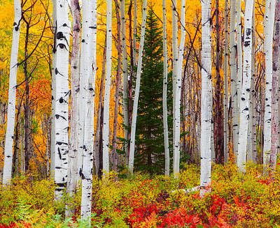 The Autumn Forest Art Print by Tim Reaves